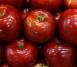 추억의 홍옥 화분상품♥자가수정 왜성 사과나무♥왜성사과♥