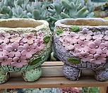 벚꽃 2종  세트