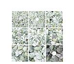 옥자갈1kg/자갈/칼라모래/색돌/색모래/옥돌/백자갈/흑자갈/화분/조경/다육장식/배양토/마사토/난석/원예자재/원예용품/화훼