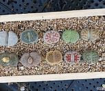 리톱스모듬(나무분 포함
