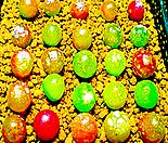 리톱스 믹스 씨앗(100립)-280여종이 섞여 있어요/리톱스씨앗/다육이 씨앗/리톱스다육이분갈이흙화분