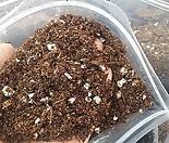 다육번식용 상토, 잎꽂이흙, 뿌리내리기흙, 다육재배용흙