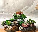 수제화분 꽃바위(3color)