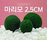 [정품] 마리모 미니 소 중 대 특대 수중식물 수생식물 반려식물 마리모키우기