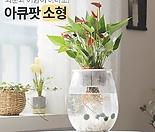 꽃이피는마을 아큐팟(소형) 화분과 어항이 하나로! 키우기쉬운식물 실내공기정화식물