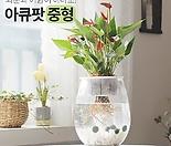 꽃이피는마을 아큐팟(중형) 화분과 어항이 하나로! 키우기쉬운식물 실내공기정화식물