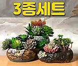 수제화분 꽃바위(3종세트)