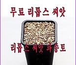 리톱스씨앗 파종토