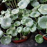 워터코인-공기정화식물 