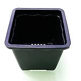 사각 플분 2호 플분10cm (10+1) 플라스틱화분 사각포트 파종분