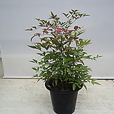 몬스테라/특가/공기정화식물/반려식물/온누리 꽃농원