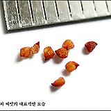 Lithopsolivacea'RedOlive'10립