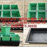 소형저면관수상자+녹색사각플분 2호 6개 세트|