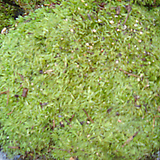 해바라기[소]-각종인테리어산소용