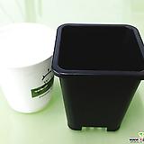 *최저가1호 7.5cm (10+1) 사각 검정플분 플라스틱화분 사각포트