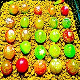 生石花믹스种子(100립)-280여종이섞여있어요/生石花种子