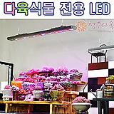 (미국수입) 환엽마리아 슈퍼클론 자구판매(첫번째 모주 자댄상품 판매)