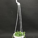 썬로즈(공기정화식물)인기상품