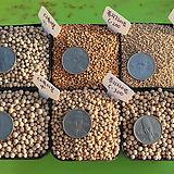 퓨리라이트(C200,300,400,500)/다육이볼(소,중,대립)/에스라이트(세,소,중립1L)천연 광물 세라믹 용토 제올라이트