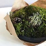 자연이끼 화분 - 실내공기정화, 실내가습효과