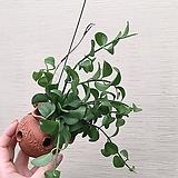구피아 9번 꽃이 피고지는 구피아 :)