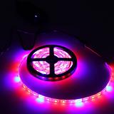 다육 월동 실내재배 필수품,LED세트 띠막대 타입 식물생장등,식물생장 LED,다육이등 다육