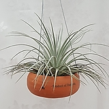 휴스턴 토분 걸이 / 공기정화식물 미세먼지 식물 