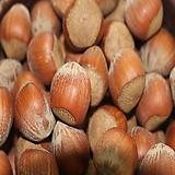 개암나무 (평구)|