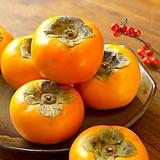 단감나무 분달이 특대품♥단감 나무 감나무|