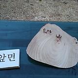 우드슬라이스(박쥐란헌팅트로피diy용)0415xp-1
