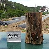꽃받침(틸란드시아) 겸 티라이트양초받침0505xp-3