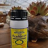 아카디안29 식물생장개선제,활력제,영양제,다육영양제