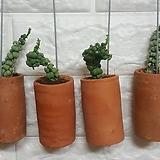 망꽃욕 / 희귀식물 공기정화식물 (1P)|