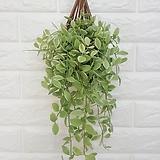 복조리 디시디아 화이트 / 공기정화식물 인테리어|