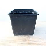 12cm물결플라스틱花盆5호(10+1/사각플분파종분플분)플라스틱花盆