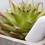 고급식물 스마트 관리기♥수분,온도,빛,영양상태♥샤오미 다육 케어 관리♥사물인터넷(loT)|