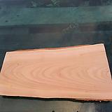 통나무슬라이스(박쥐란헌팅트로피,틸란드시아패드)0528spxp2|Tillandsia
