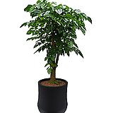신종녹보수 고급폴리분 개업화분|happy tree