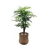 신종녹보수 사무실개업화분 고급화분 개업화분|happy tree
