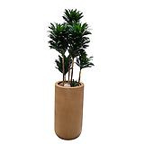 콤팩타 키우기쉬운공기정화식물 축하화분 개업화분|