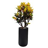 크로톤 고급폴리분 개업식화분 집들이|Codiaeum Variegatum Blume Var Hookerianum