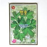약리작용이 탁월한 재래종 방풍 씨앗 채소 식용식물|