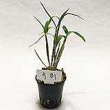 녹취/난/꽃/동양란/공기정화식물/풍란/화분/나라아트|