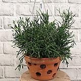 콤펙타 공기정화식물