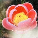 핑크브러쉬