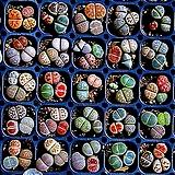 리톱스 믹스 씨앗(300립)-280여종이 섞여 있어요/리톱스씨앗
