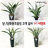 고객감사1+1이벤트/난/동양란/공기정화식물/식물/나라아트|