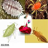 간편한 식물살충제 싹자바