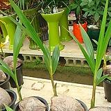코코낫야자미-초세먼지탁월한코코넛|