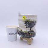 수제화분(반값할인)  545|Handmade Flower pot